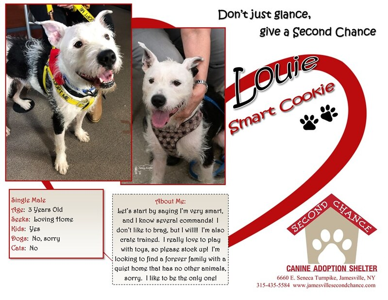 Adopt - SECOND CHANCE CANINE ADOPTION SHELTER
